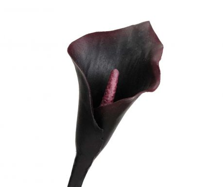 Sztuczny kwiat Black Arum