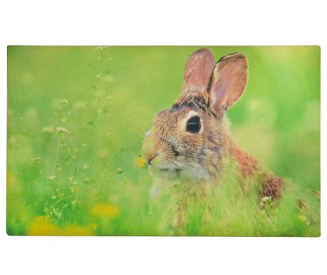 Wycieraczka Rabbit 45x75 cm