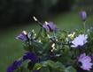 Vrtna svetlobna girlanda Pieces