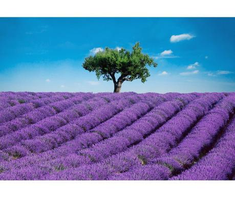 Тапет Provence 254x366 см