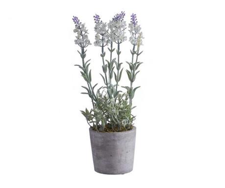 Miorice White Műnövény virágcserépben