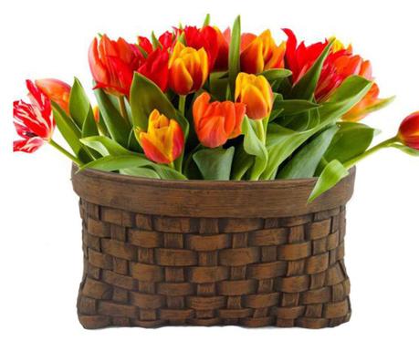 Posuda za cvijeće Cesto Tamano