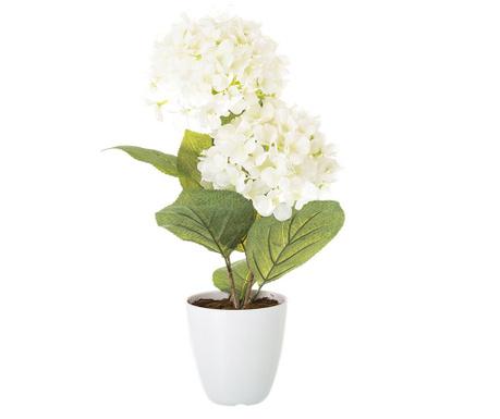Hydrangea Műnövény cserépben