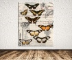 Tablou Butterfly Signature 100x140 cm