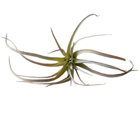 Planta artificiala Damia