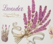 Dekorační nádoba Lavender