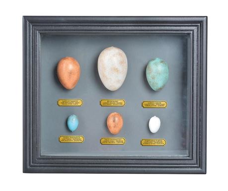 Decoratiune de perete Eggs