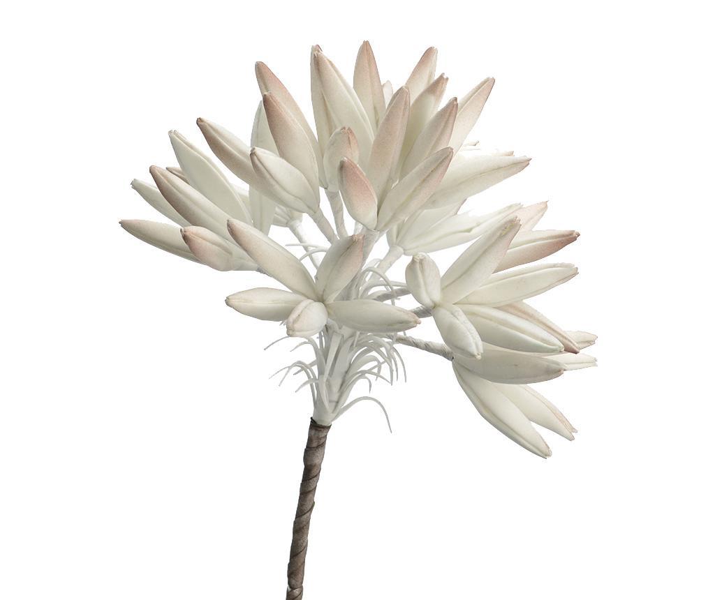 Cala Művirág