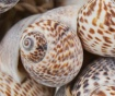 Decoratiune suspendabila Shells Nature