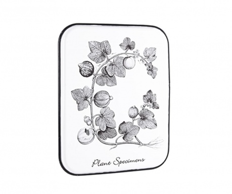 Zidni ukras Plant Specimens