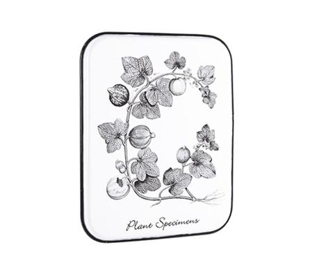 Stenska dekoracija Plant Specimens