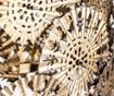 Lustra Metallic Lace
