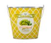 Galeata decorativa Vegetable Cabbage