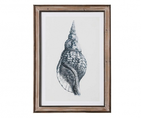 Obraz Shell Sharp 50x70 cm