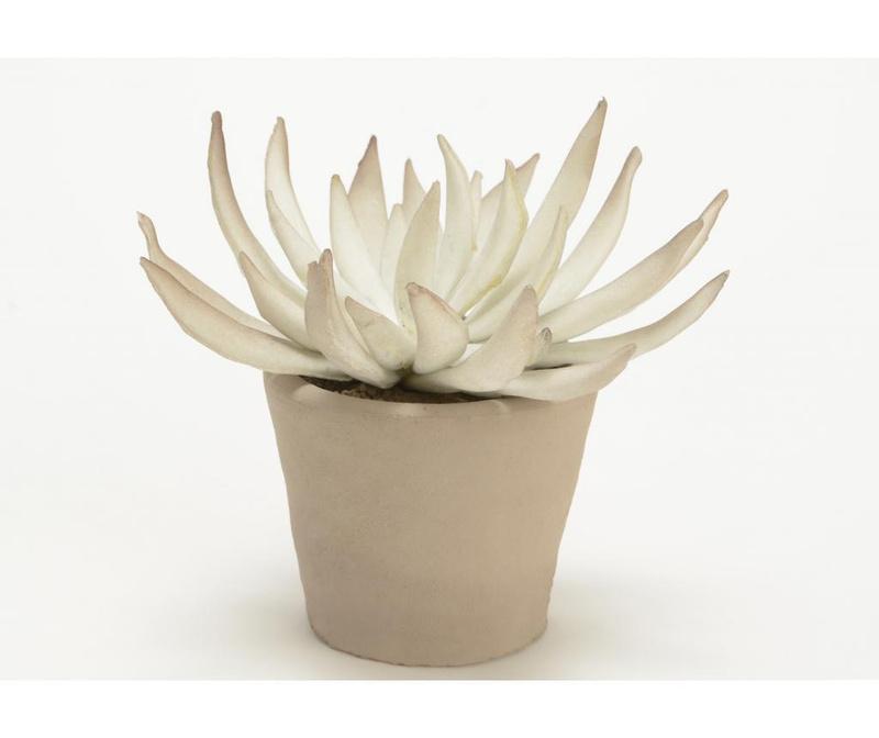 Umjetni cvijet u posudi Aloe