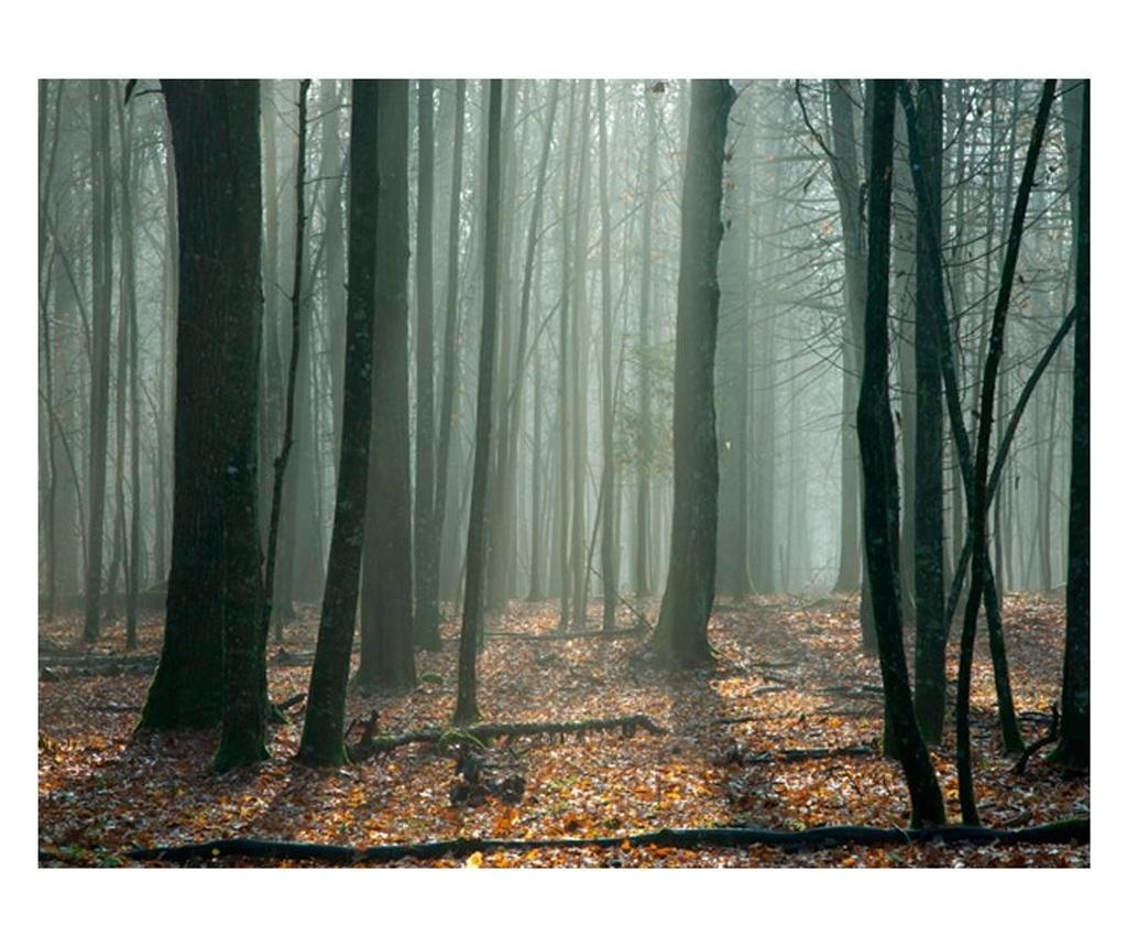 Fototapet Witches' Forest 231x300 cm